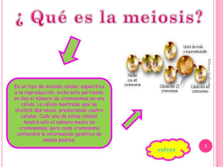 ¿ Qué es la meiosis?