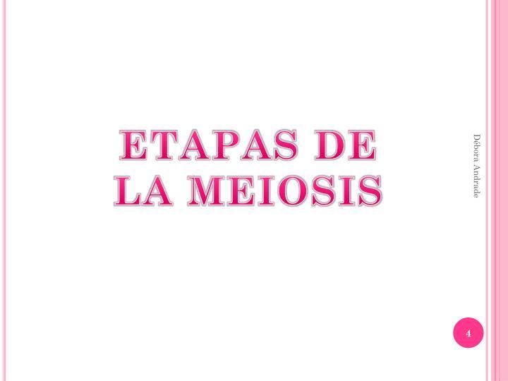 ETAPAS DE