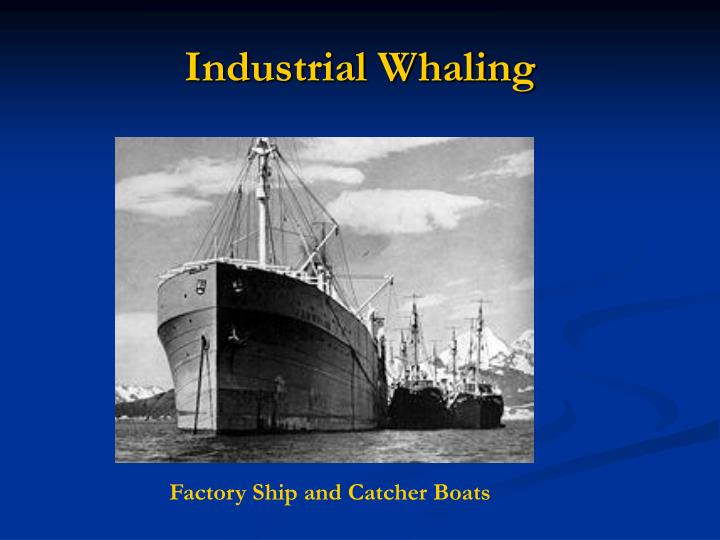 Industrial Whaling