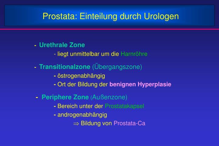 Prostata: Einteilung durch Urologen