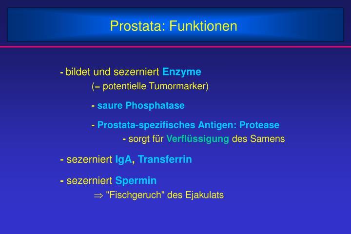 Prostata: Funktionen