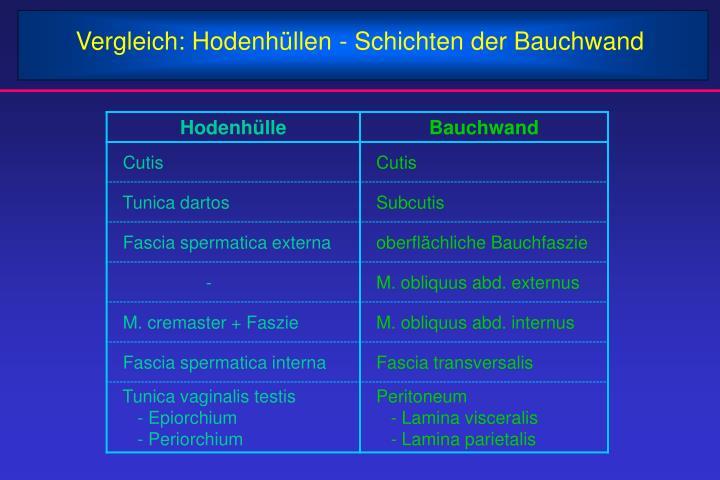 Vergleich: Hodenhüllen - Schichten der Bauchwand