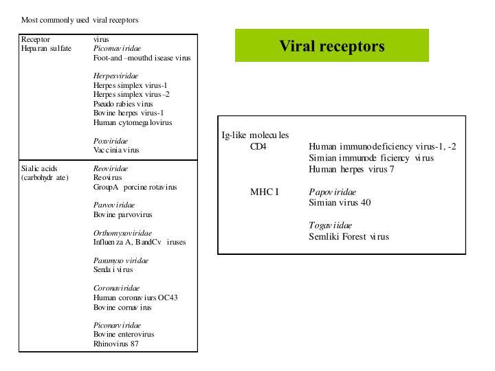 Viral receptors