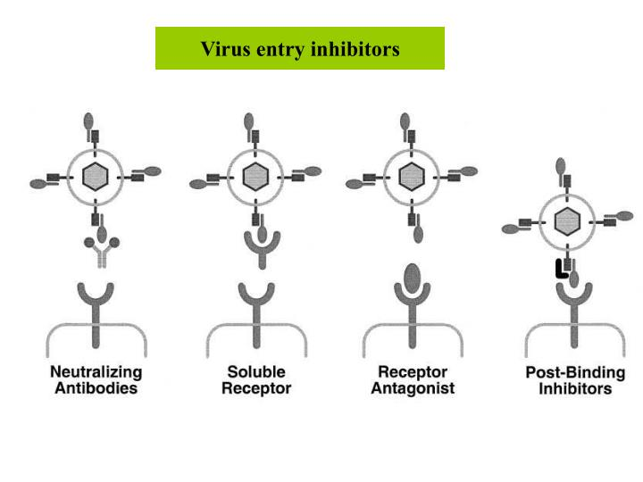 Virus entry inhibitors