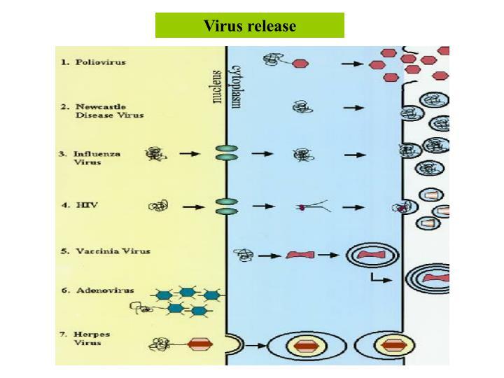 Virus release