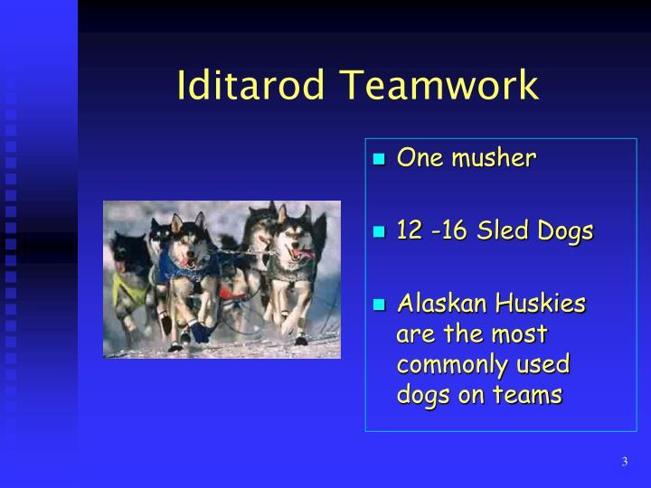 Iditarod Teamwork