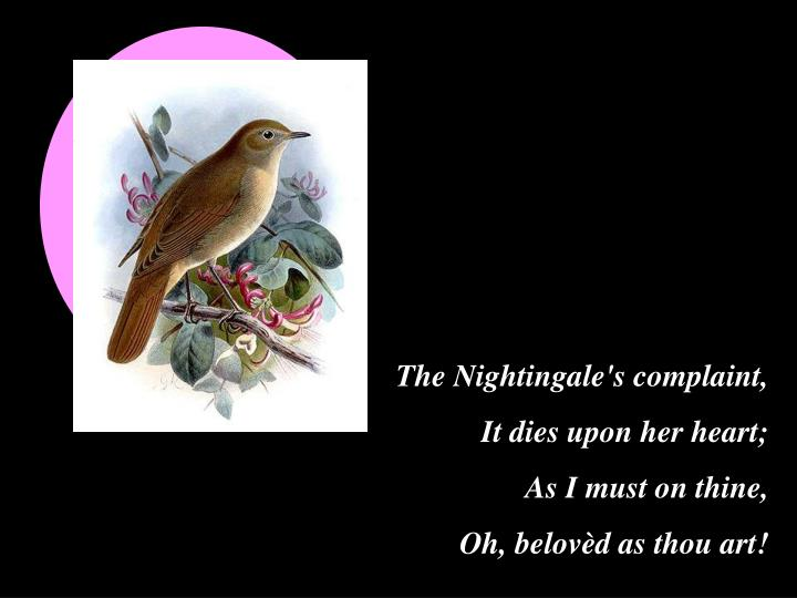 The Nightingale's complaint,