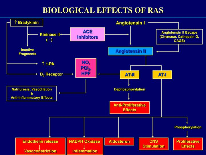 BIOLOGICAL EFFECTS OF RAS