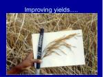 improving yields