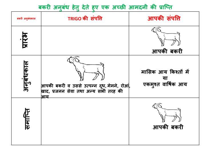 बकरी अनुबंध हेतु देते हुए एक अच्छी आमदनी की प्राप्ति