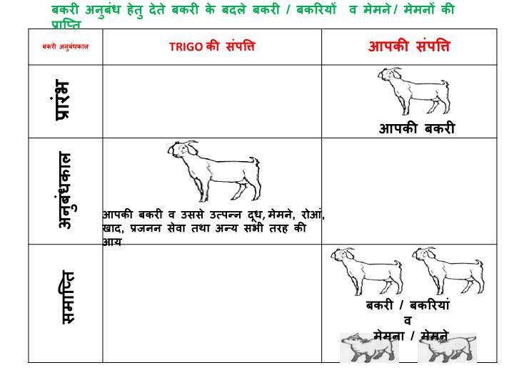 बकरी अनुबंध हेतु देते बकरी के बदले बकरी / बकरियों  व मेमने
