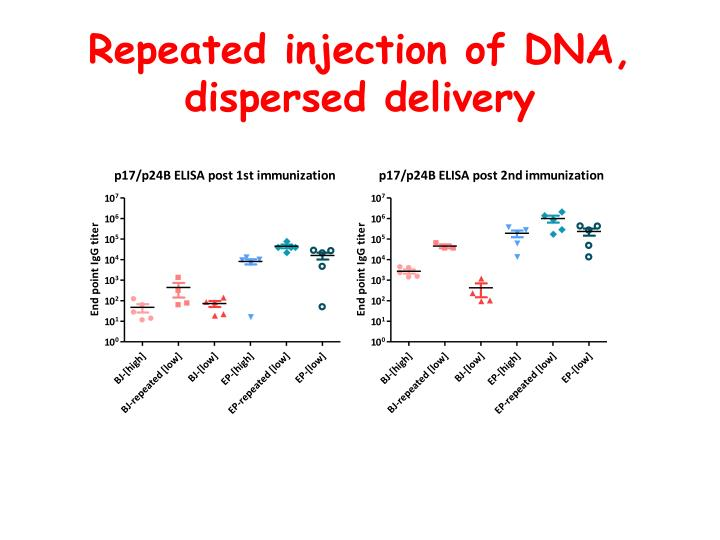 Repeated injection of DNA, dispersed delivery