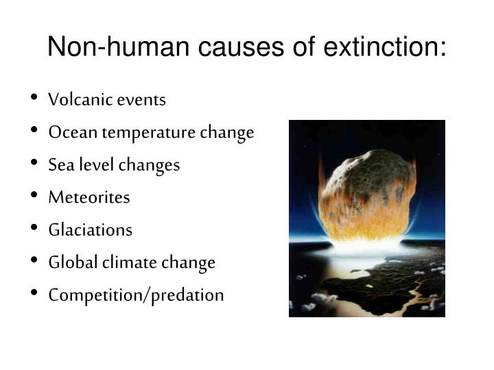 Non-human causes of extinction: