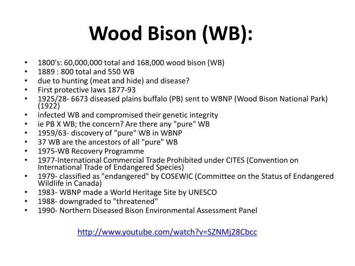 Wood Bison (WB):