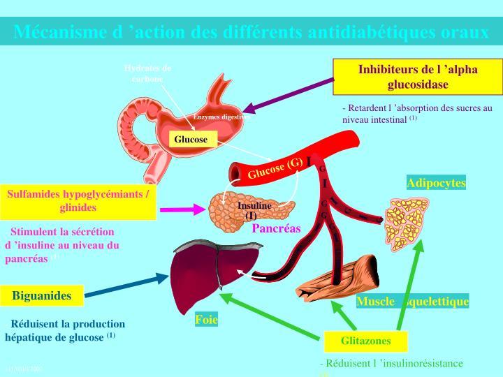 Mécanisme d'action des différents antidiabétiques oraux