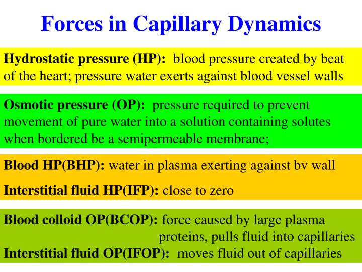 Forces in Capillary Dynamics