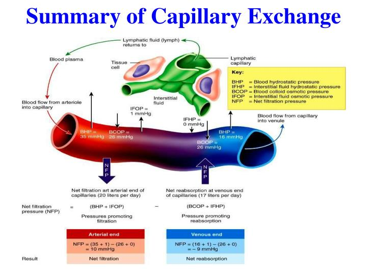 Summary of Capillary Exchange