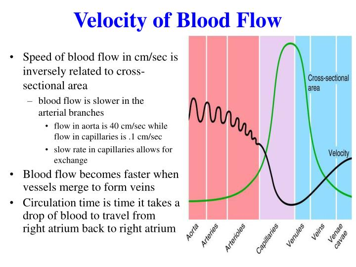Velocity of Blood Flow