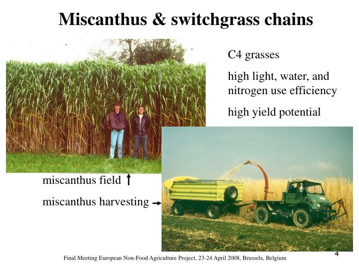 Miscanthus & switchgrass chains