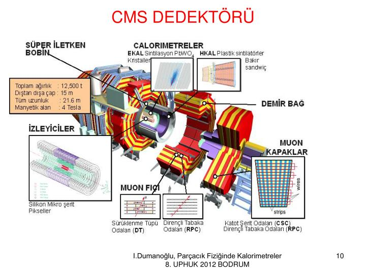 CMS DEDEKTÖRÜ