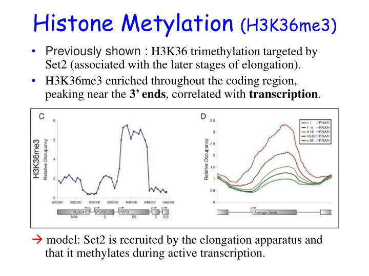 Histone Metylation