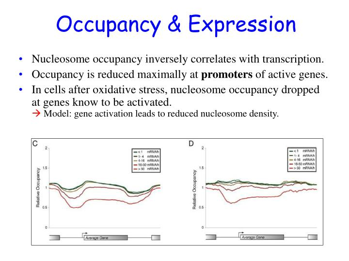 Occupancy & Expression