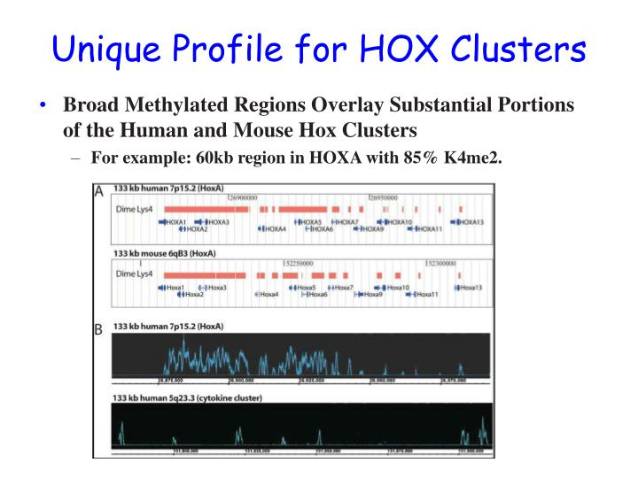 Unique Profile for HOX Clusters