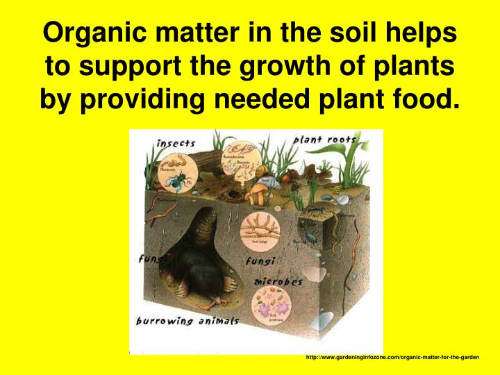 Organic matter in the soil helps to support the growth of plants by providing needed plant food.