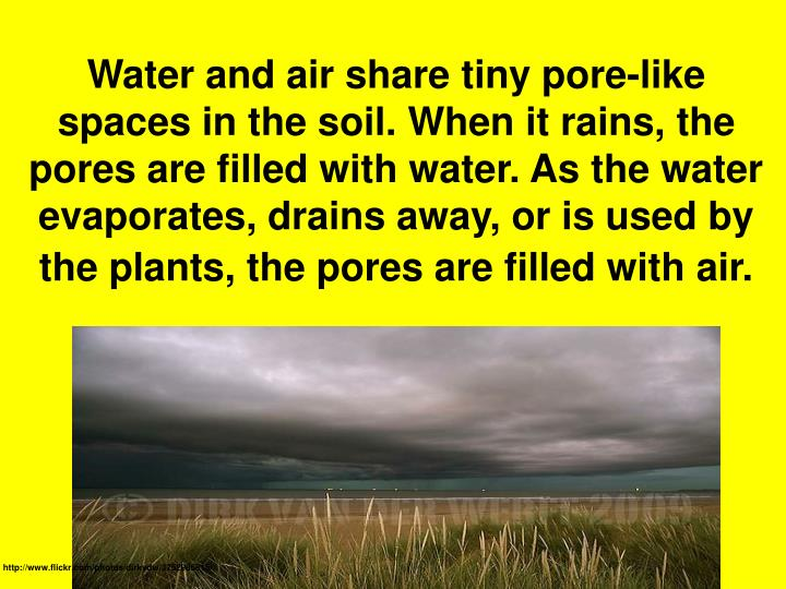 Water and air share tiny pore-like spaces in the soil. When it rains, the pores are filled with water. As the water evaporates, drains away, or is used by the plants, the pores are filled with air.