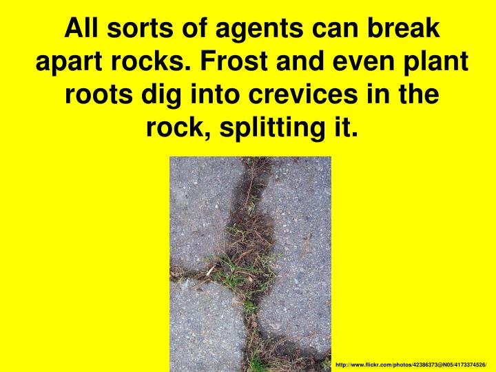 All sorts of agents can break apart rocks. Frost and even plant roots dig into crevices in the rock, splitting it.