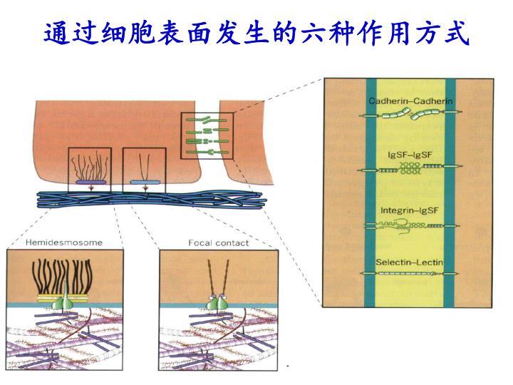 通过细胞表面发生的六种作用方式