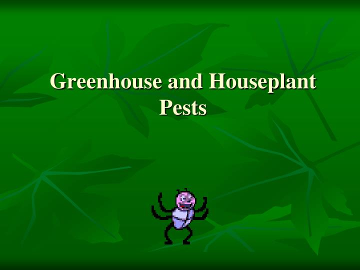 Greenhouse and Houseplant Pests