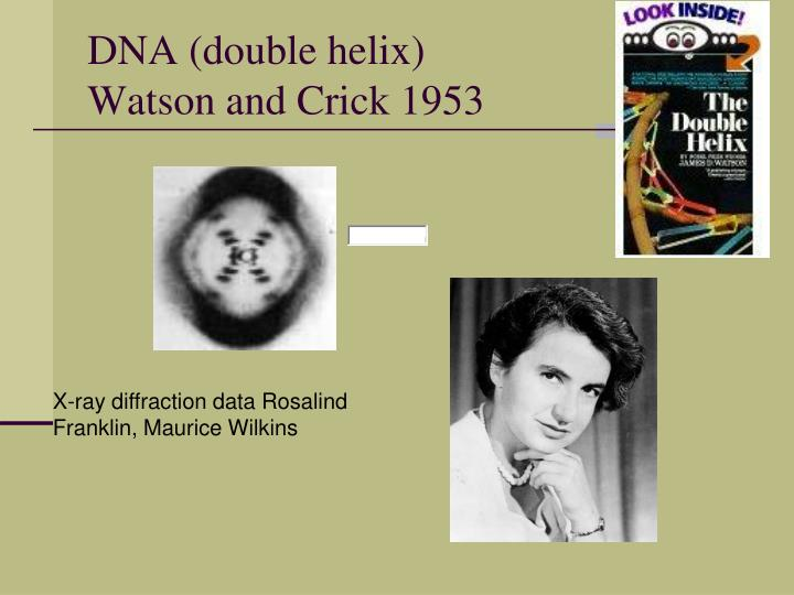 commentary on watson and crick dna discovery essay Read this essay on watson and crick the discovery of the dna pauling published an incorrect triple helix model of dna both crick, and particularly watson.
