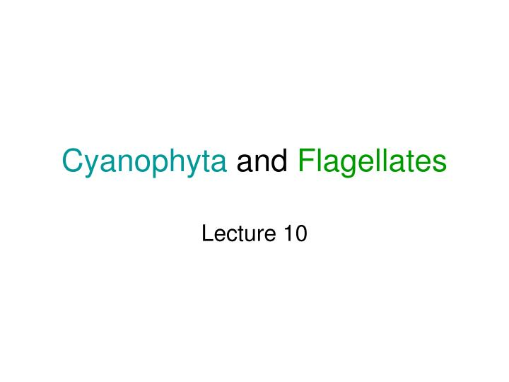 Cyanophyta and flagellates