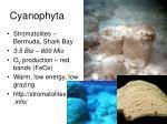 cyanophyta1