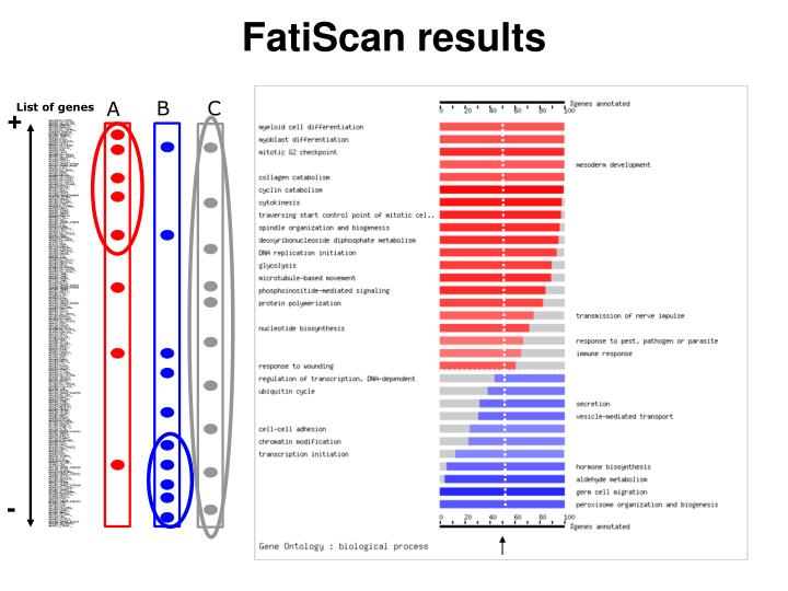 FatiScan results