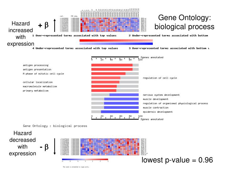 Gene Ontology: biological process