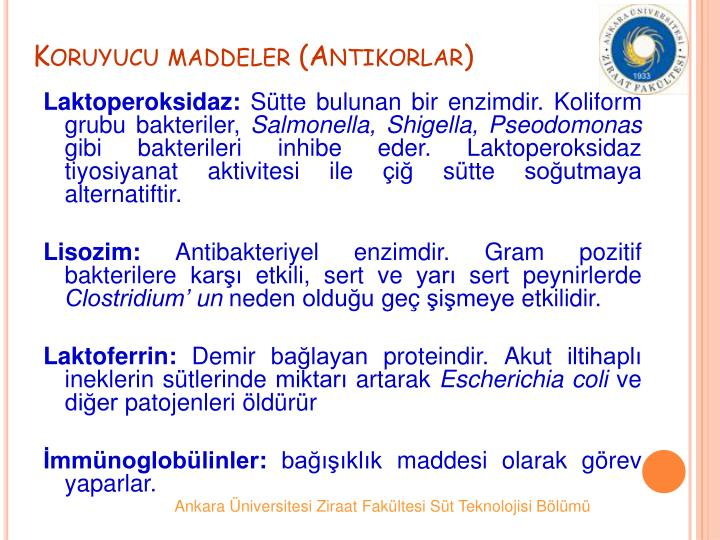Koruyucu maddeler (Antikorlar)