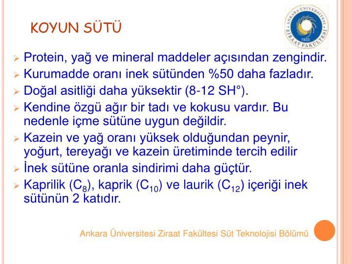 KOYUN ST