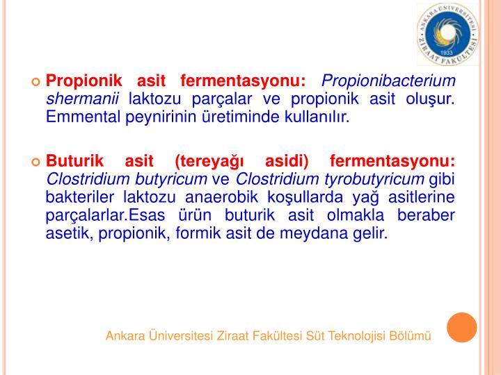 Propionik asit fermentasyonu: