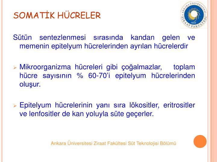 SOMATK HCRELER