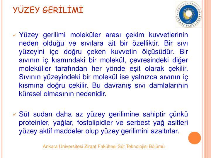 YZEY GERLM