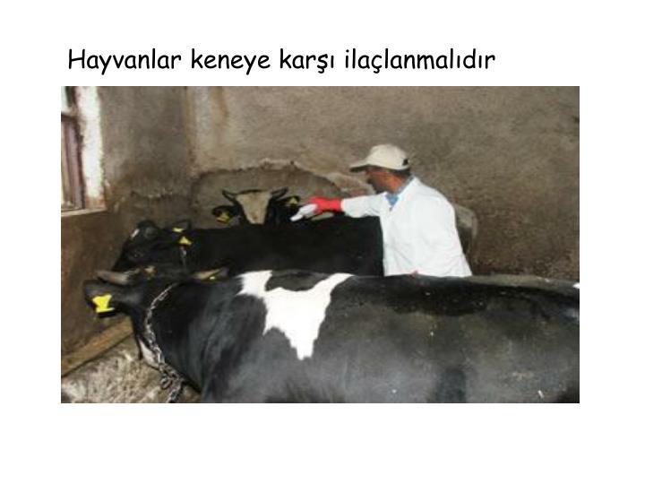 Hayvanlar keneye karşı ilaçlanmalıdır