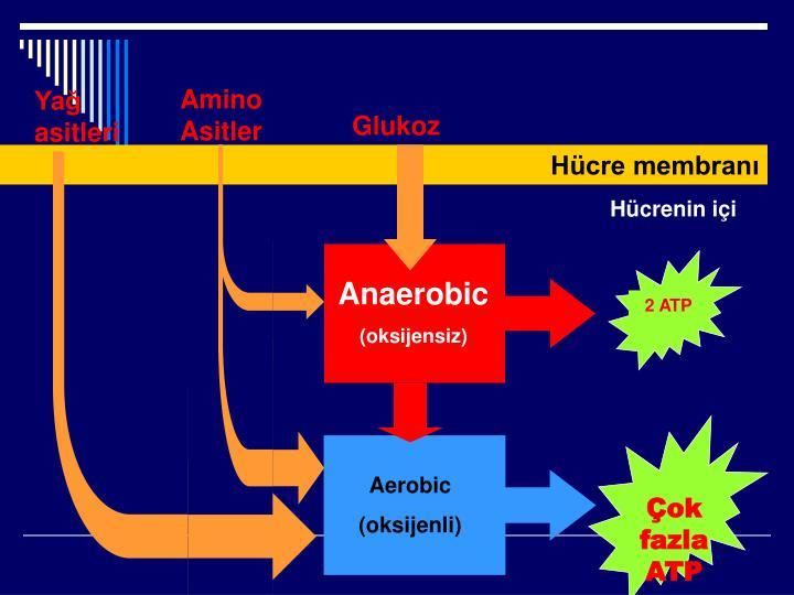AminoAsitler
