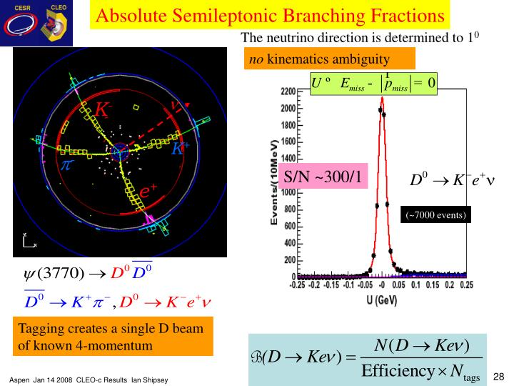 Absolute Semileptonic Branching Fractions