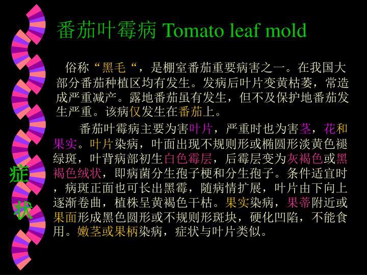 番茄叶霉病