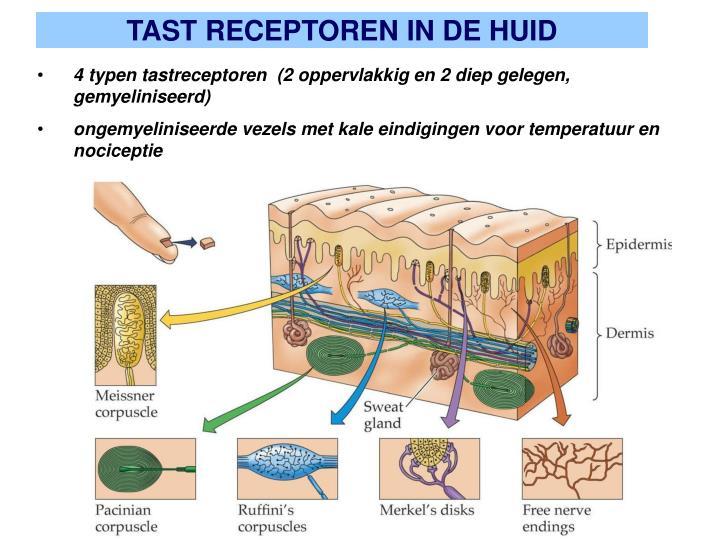 TAST RECEPTOREN IN DE HUID