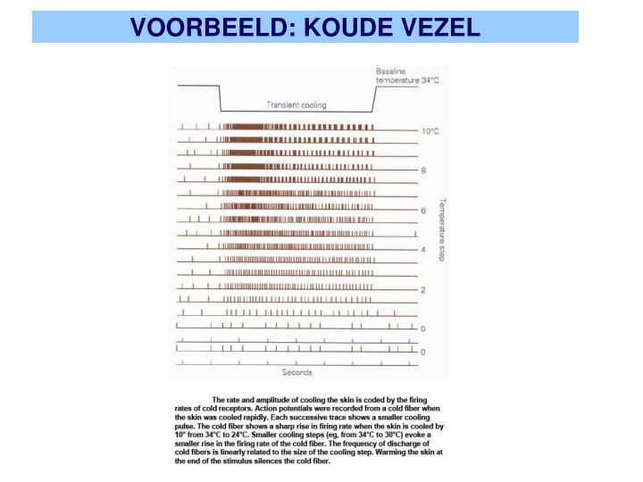 VOORBEELD: KOUDE VEZEL