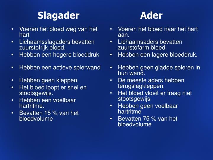 Slagader                      Ader