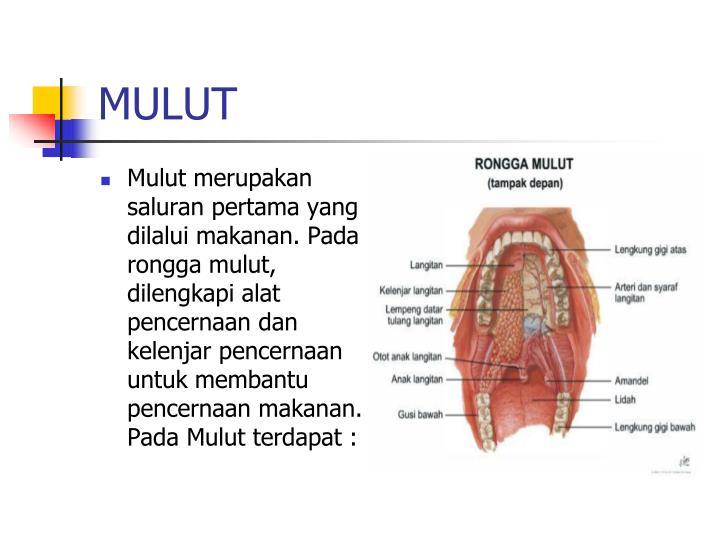 MULUT